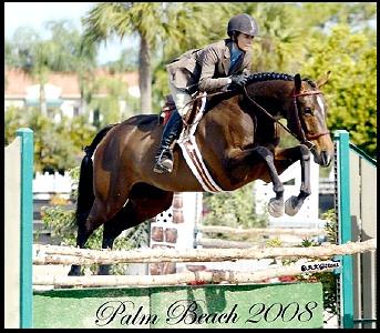 Benchmark Equestrian Naples, Fl Hunter Jumper Horse Lessons
